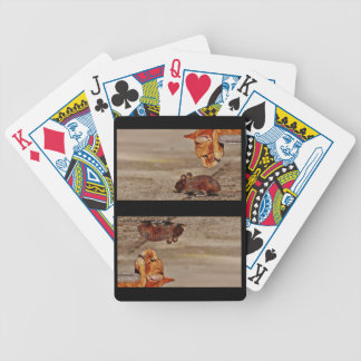 Orange Tiger Cat Staring at Mouse Bicycle Playing Cards