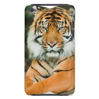 Orange Tiger iTouch Case Barely There iPod Case