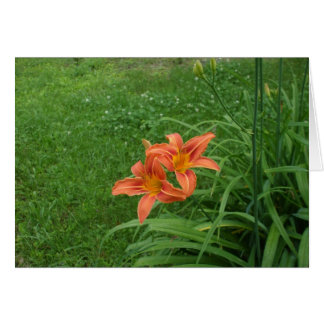 Orange Tiger Lilies-Blank Card