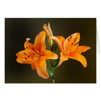Orange Tiger Lillies and Buds Photograph Greeting Card