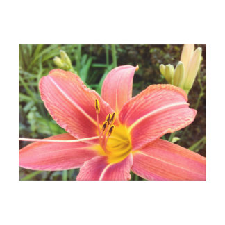 Orange Tiger Lily Close-up Canvas Print