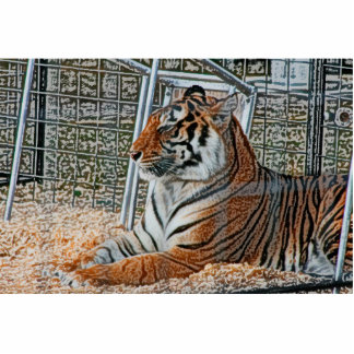 Orange tiger looking right sitting up sketch image photo cut outs