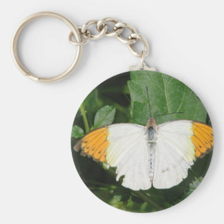Orange Tipped White Winged Butterfly Keychain