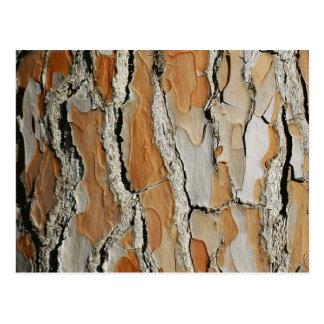 Orange Tone Tree Bark Texture Postcard