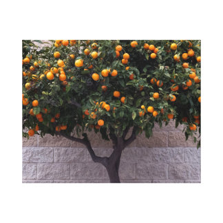 Orange Tree Against a Wall Canvas Print