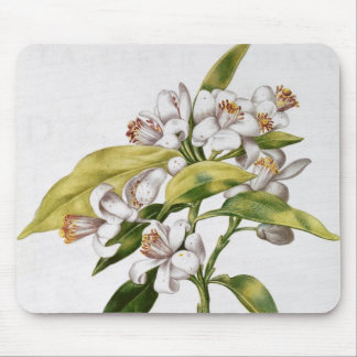 Orange tree flower, from 'La Guirlande de Julie' Mouse Mat