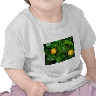 Orange tree shirts