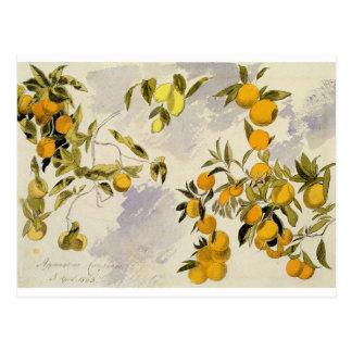 Orange Trees, 1863 (w/c, pen and ink over graphite Postcard
