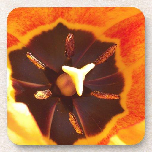 Orange Tulip Drink Coasters
