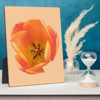 Orange Tulip Plaque
