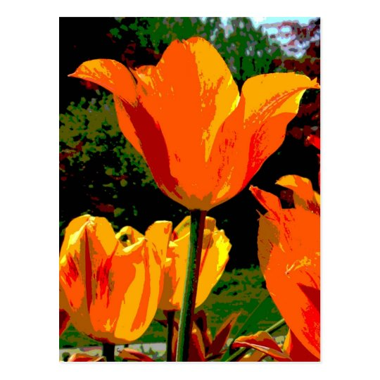 Orange tulip postcard