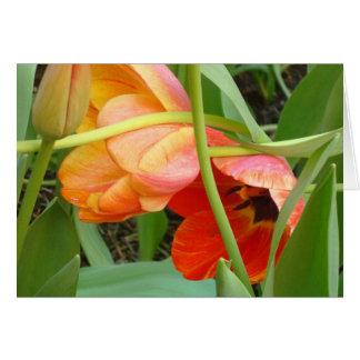 Orange Tulip Sculpture Note Cards