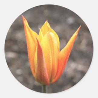 Orange Tulip Stickers