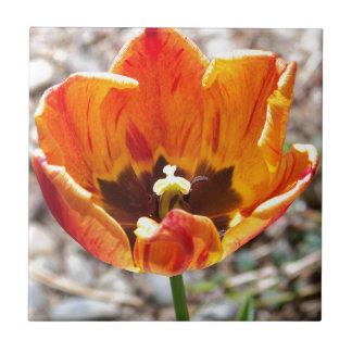 Orange tulip tile