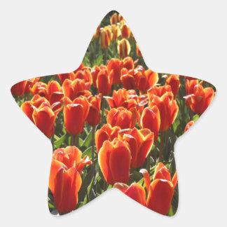 Orange Tulips Star Sticker