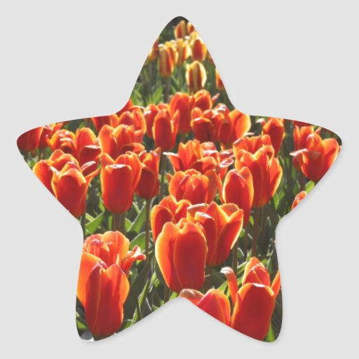 Orange Tulips Sticker
