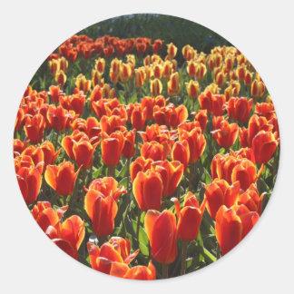 Orange Tulips Round Sticker