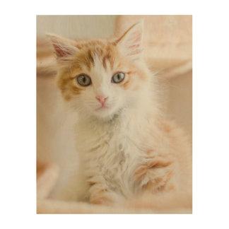 Orange & White Kitten Wood Wall Decor