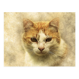 Orange & White Kitty | Abstract | Watercolor Postcard