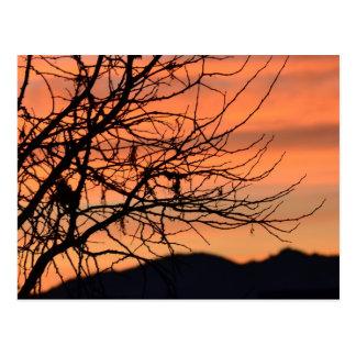 Orange Winter Sky Postcard