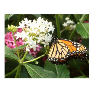 Orange Yellow Butterfly Pink White Flowers Postcard