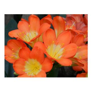 Orange Yellow Flower Postcard