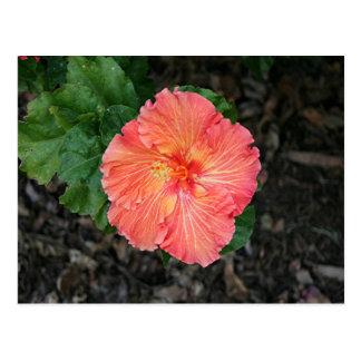 Orange yellow hibiscus flower postcard