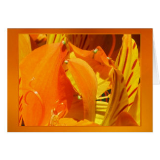 Orange-Yellow Lily Flower Greeting Card
