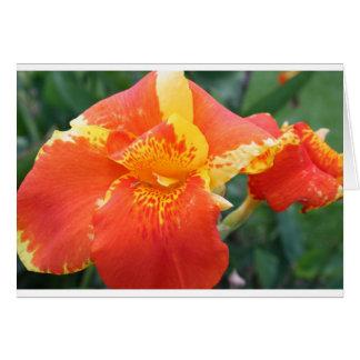 Orange yellow musa tropical flower,postcard greeting card
