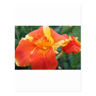 Orange yellow musa tropical flower postcard