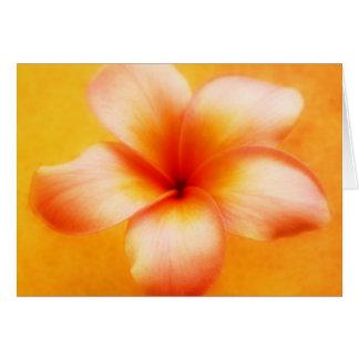 Orange Yellow Plumeria Flower Orange Background Note Card