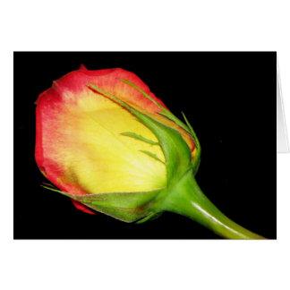 Orange-Yellow Rose Greeting Card