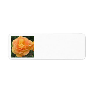 Orange Yellow Rose Return Address Label