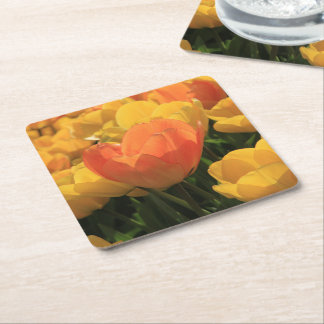 Orange yellow tulips by Thespringgarden Square Paper Coaster