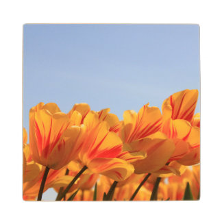 Orange yellow tulips by Thespringgarden Wood Coaster