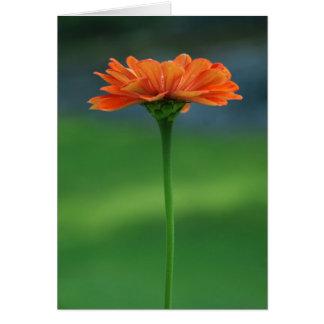 Orange Zinnia by Cynthia Turner Designs Card