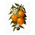 Oranges and Poppies Postcard