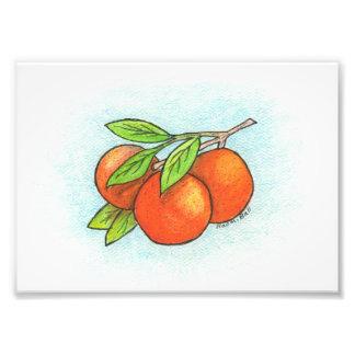 Oranges Illustration Photo Print