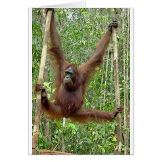 Orangutan a hangin' card