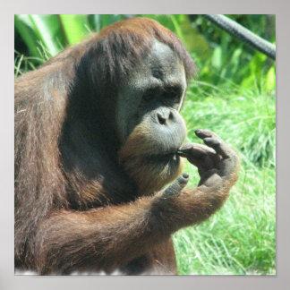 Orangutan Ape Print