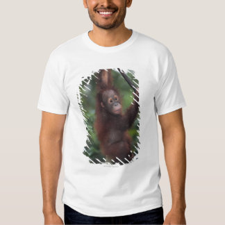 Orangutan Baby Climbing Liana Tees