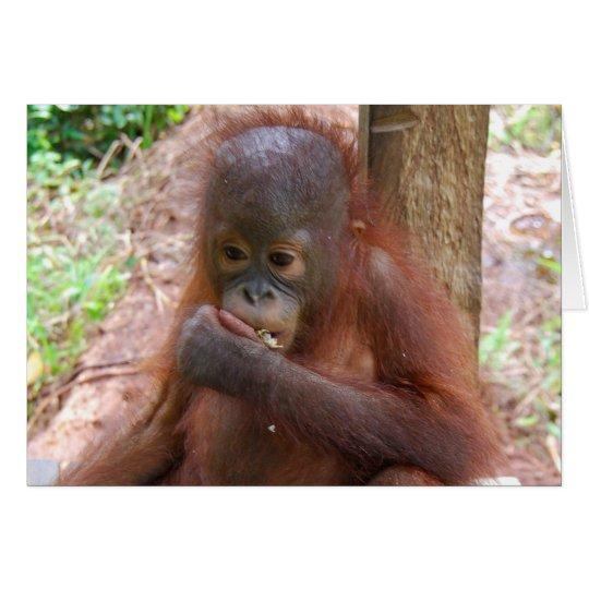 Orangutan Baby in Borneo Jungle School Card