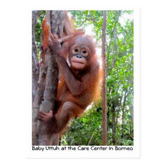 Orangutan Baby Uttuh in Rainforest Post Card