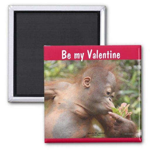 Orangutan Baby Valentine's Day Fridge Magnets