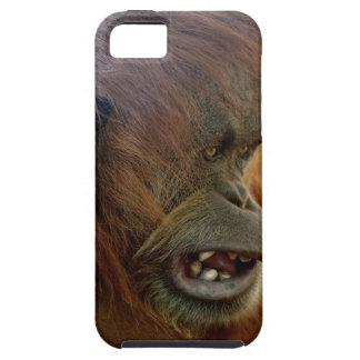 "Orangutan ""Bad Hair Day"" iPhone 5/5S Cases"