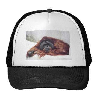 Orangutan Cap
