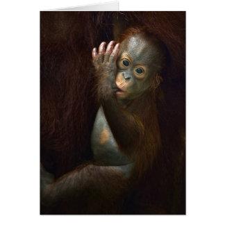 Orangutan Card