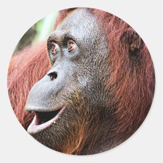 Orangutan Classic Round Sticker