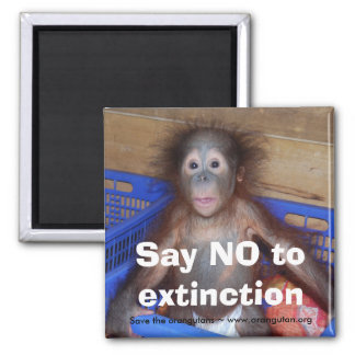 Orangutan Conservation Square Magnet