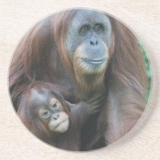 Orangutan Family Coaster